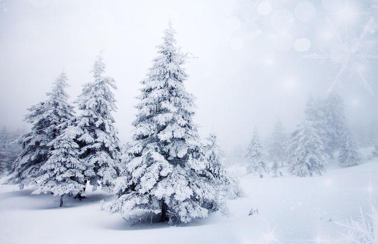 nice snow nature