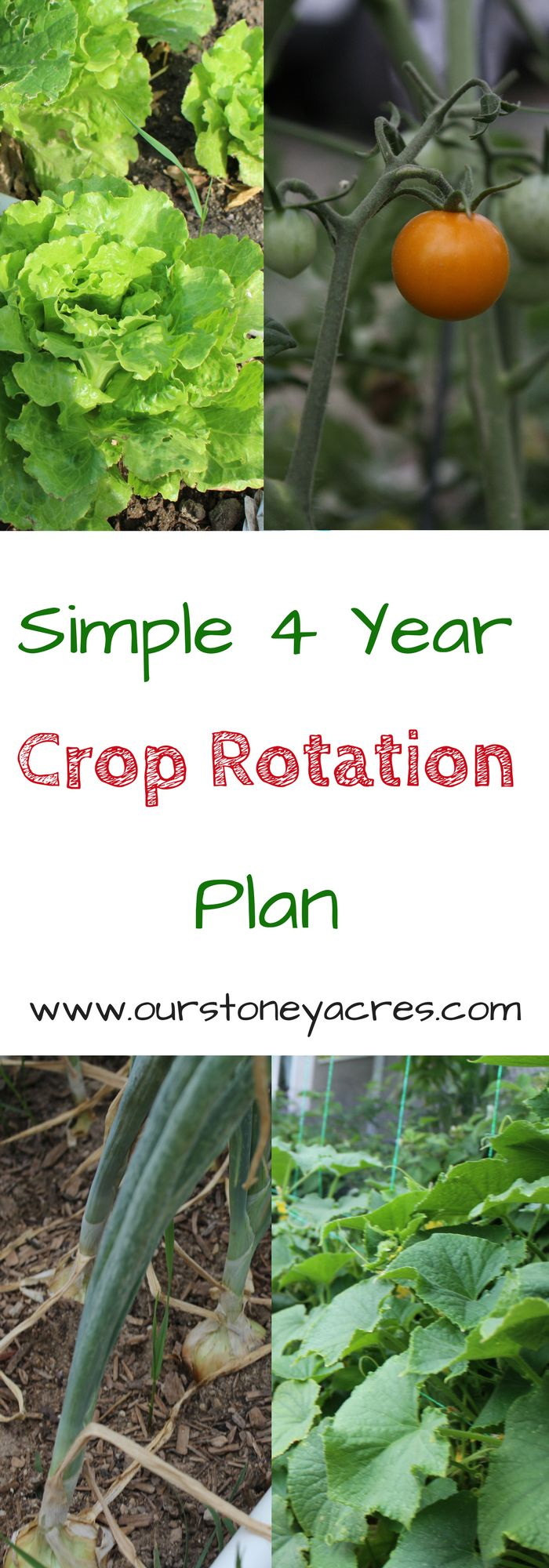 Simple 4 Year Crop Rotation Plan. Crop rotation in a home garden is more important than many people think. This simple 4 year crop rotation plan will keep your garden and soil healthy.