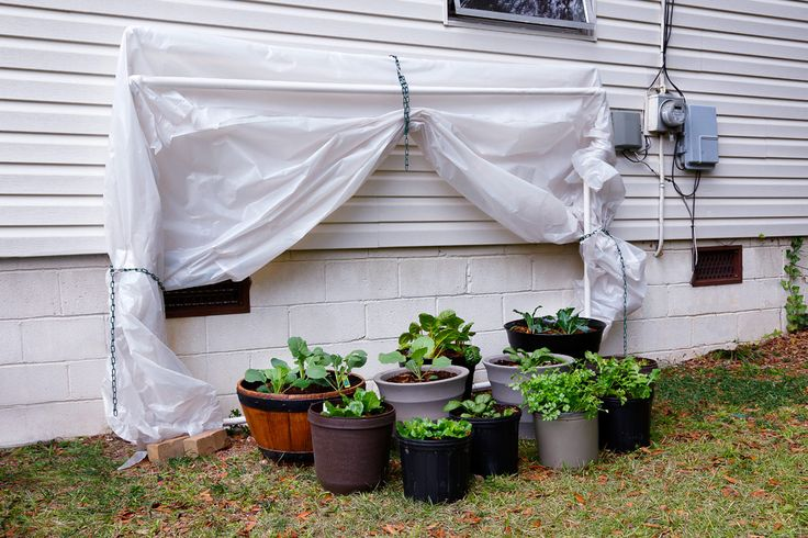 Fold-Down Greenhouse - Make this fold-down greenhouse with PVC pipes to protect your plants from frosts and cold weather! Tutorial: Bonnie Plants
