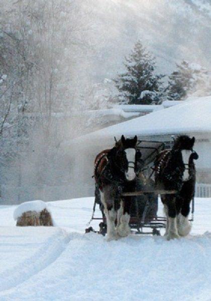 Horse drawn sleigh ride...                                                                                                                                                     More
