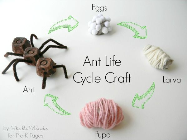 Teach your students the life cycle of an ant through an educational craft that makes learning fun.