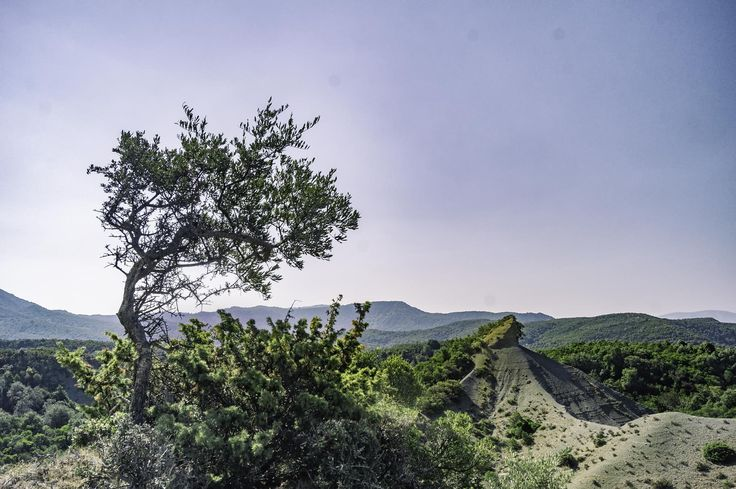 A lone olive tree is reaching for the sky, above a landscape dominated by mountains. A photo taken at the area of Valtos, near Amfilochia in western Greece