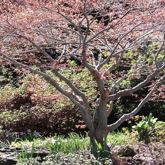 13 best images about plants and trees for our backyard on for Small slow growing evergreen trees