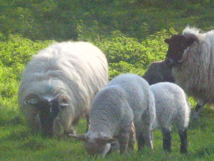 Durrus, County  Cork  Ireland  Holiday