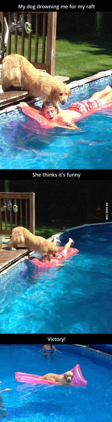 Dog drowning human for the raft