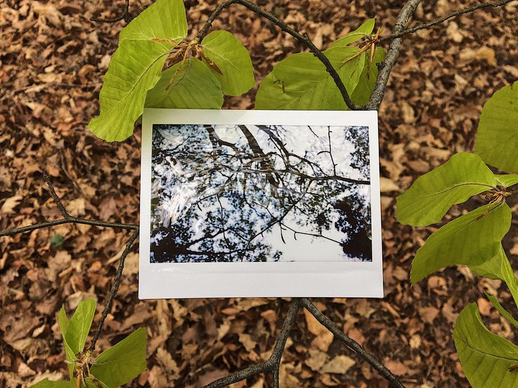 https://flic.kr/p/V1Ug9b | that1with the upside down / downside up view. | #fujiFilm #instax #instantPhotography #polaroid #polaroidWeek #roidWeek #spring #autumn #fall #leaves #forest #trees #wood #landscape #nature