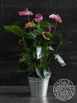 Каталог   Botanic Craft
