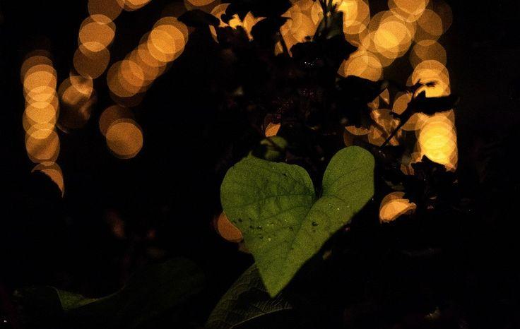 Love... #love #rain #boke #light #leaf #mindfulness