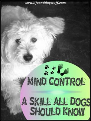 Mind Control - A Skill All Dogs Should Know at Life and Dog stuff blog!