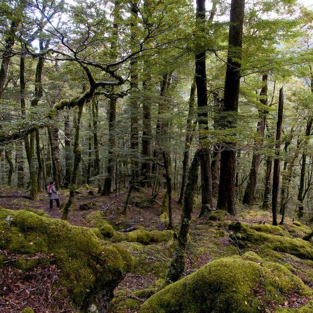 Nine Great Walks of New Zealand: Routeburn Track