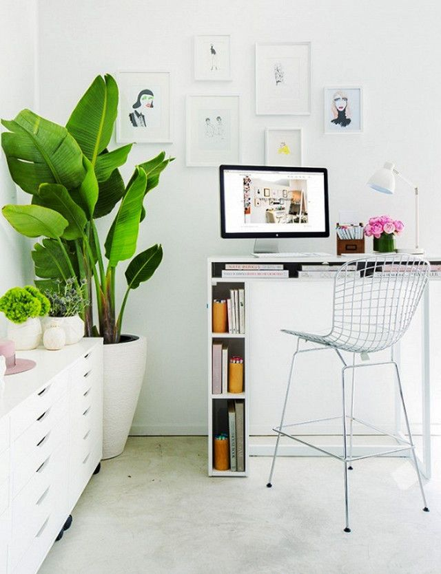 Bright home office with a standing desk, a large indoor plant, and a gallery wall