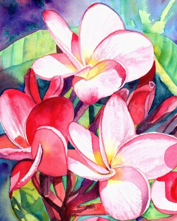 Plumeria Art Print Painting Decor Wall Art From Kauai Hawaii By Artist Marionette Frangipani Paintings Of Flowe In 2020 Tropical Painting Flower Painting Etsy Wall Art