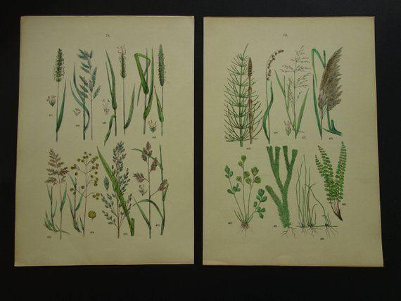 Oude Botanische Prenten : Free worldwide shipping voor deze set van oude botanische van
