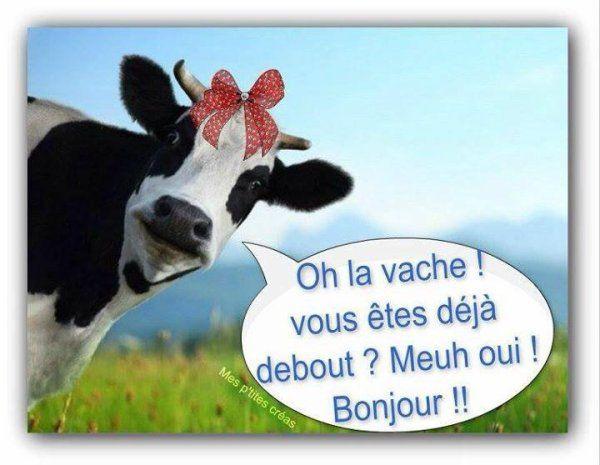 Image Drole Pour Dire Bonjour Bonjour Drole Bonjour Humour Image Humour