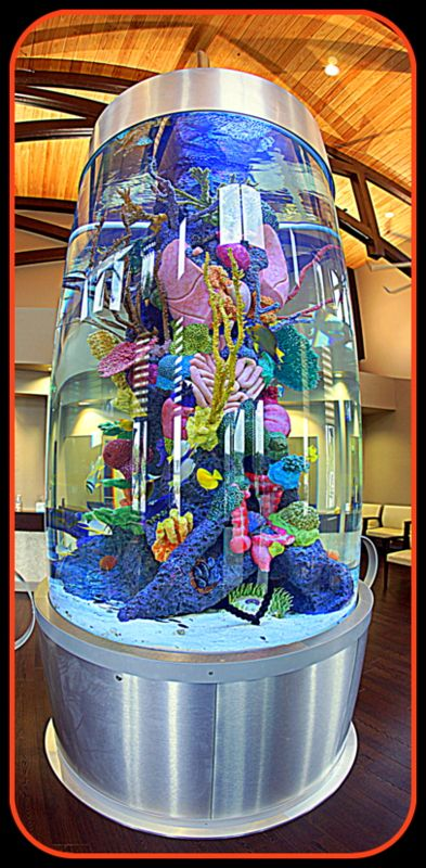 """Cooper Family Medical Waiting Room - Bradenton, Florida - This Beautiful Aquarium Was Built & Installed By ATM - Las Vegas, Nevada - - See Them On The Animal Planet - """"Tanked"""""""