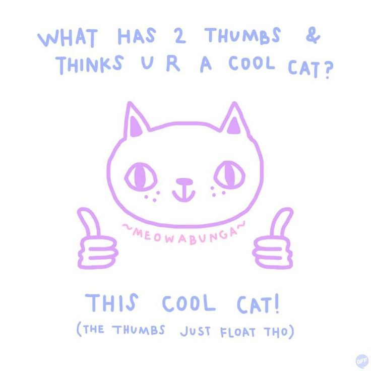 you're a cool cat.