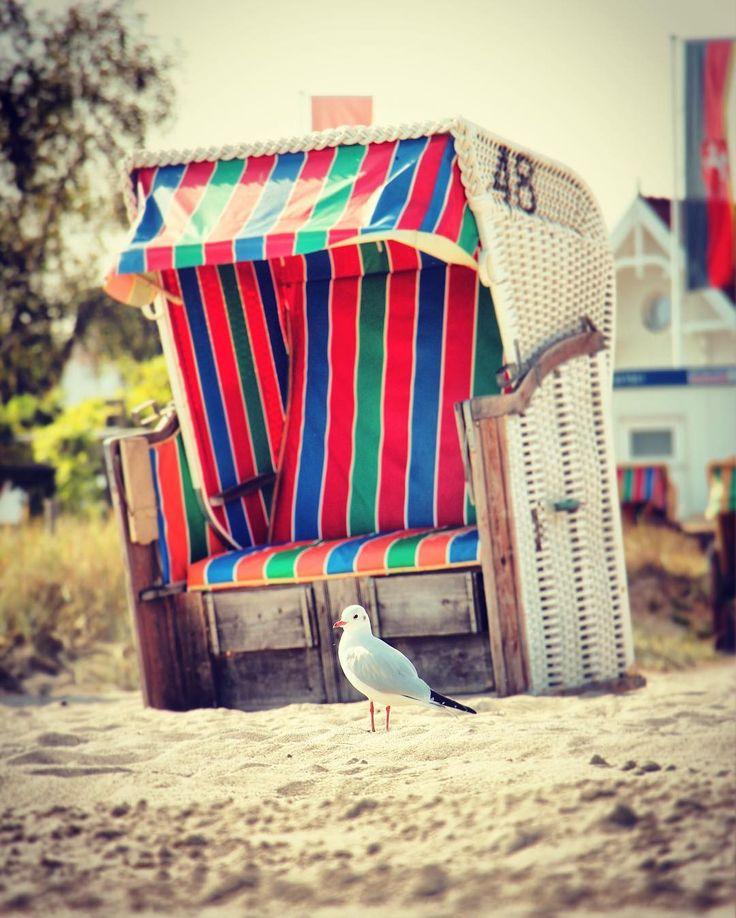 #seagull #balticbeachchair #scharbeutz #schleswigholstein #germany #2016 #travel #discover #explore #trip #balticsea #beach #relax #holidays #nature #colorful #sand #möwe #strandkorb #haffkrug #ostsee #deutschland #strand #reisen #entdecken #urlaub #natur #entspannen #madeingermany #möwenschiss