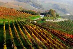 Strade del vino in Piemonte, alla scoperta delle Langhe e del Barolo - Viaggi Ok (Blog)
