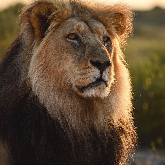 I'm so sorry that bastard let you suffer so long before he murdered you. Your memory will be forever a blessing. And so the sun sets for Cecil...