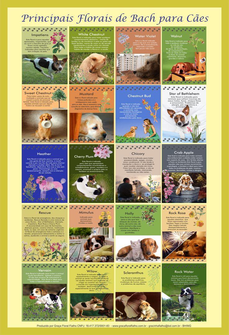 Poster Principais Florais de Bach para Cães - formato A3 - papel couchê 210gr