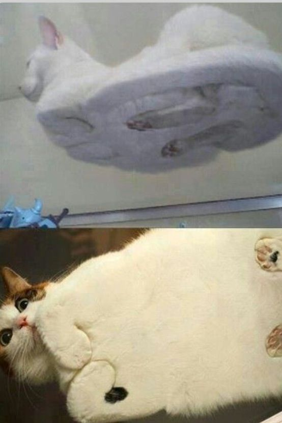 Fat cats through glass, omg this is so funny!!!!