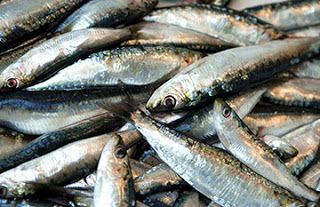 FG Impounds Destroys N110m Worth Of Rotten Fish From UK   The federal ministry of agriculture and rural development has intercepted 15- container load of rotten fish valued at N110million at SIFAX Off Dock Terminal Lagos.  The rotten fish identified as Blue-White specie popularly called Panla had over 17650 cartons in the 15 containers intercepted.  Speaking over the weekend the deputy director and head of department Fish Quality Assurance and Fish Disease Management Division of the federal…