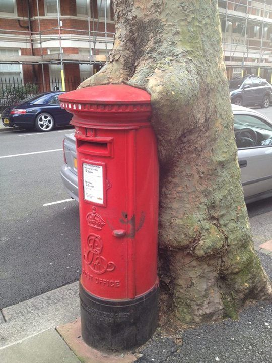 How awesome would it be to get a photo of this Pillar Box hugging tree?