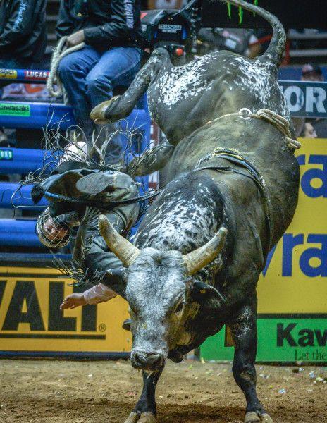 Doctor, crew keep PBR riders riding bulls | Albuquerque Journal News