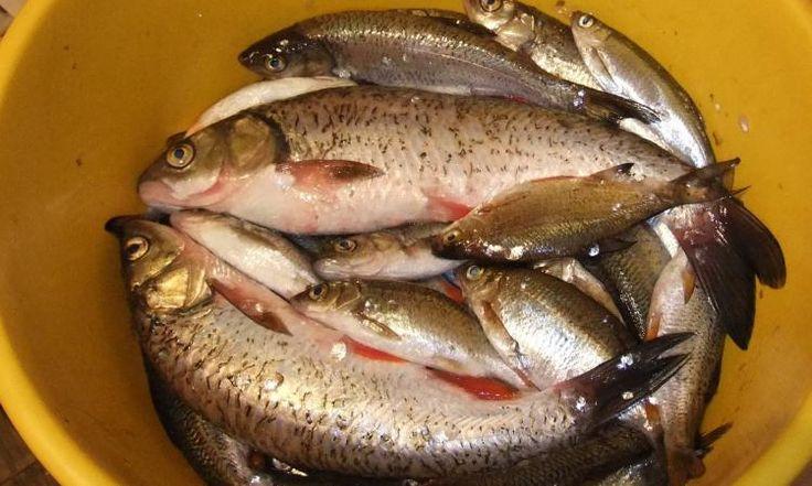 Незаконная рыбная продукция