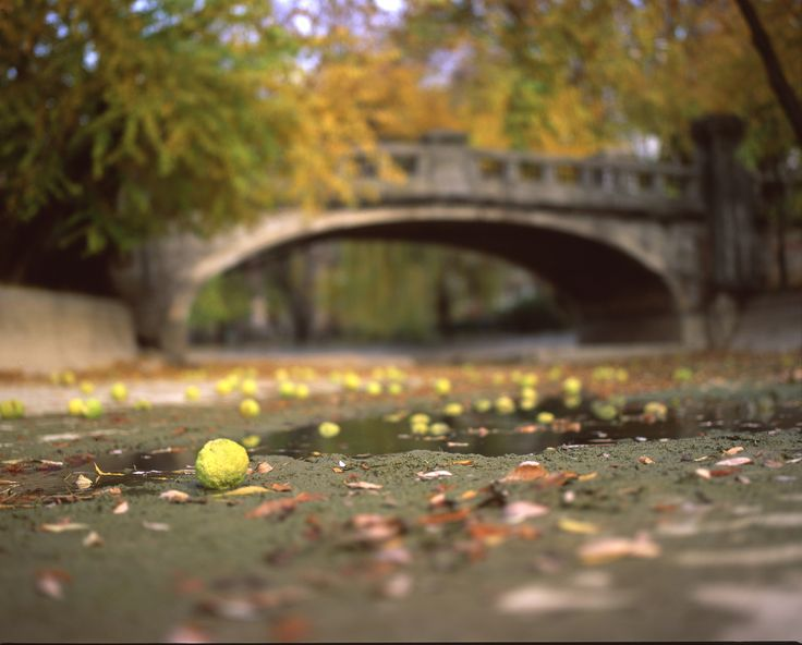 autumn falling - autumn falling shot on Mamiya rz67proII + 110/2.8 and velvia50