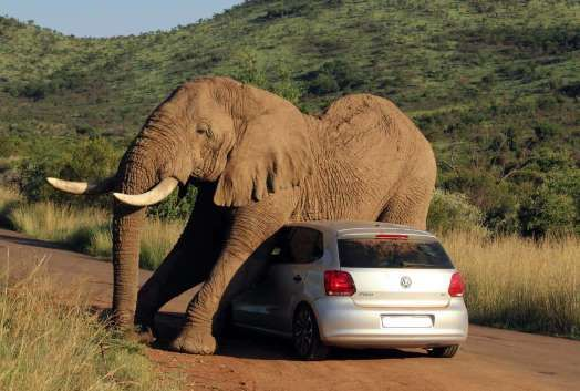 An elephant relieves an itch on a small car in Pilanesberg National Park, South Africa.