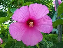 flower - Recherche Google