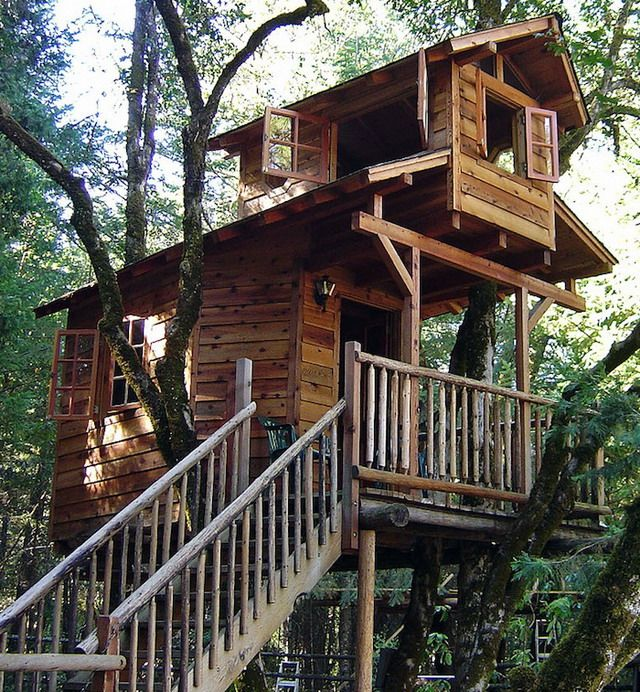 Best Babies Tree Houses Images On Pinterest Amazing Tree - Contemporary banyon treehouse california