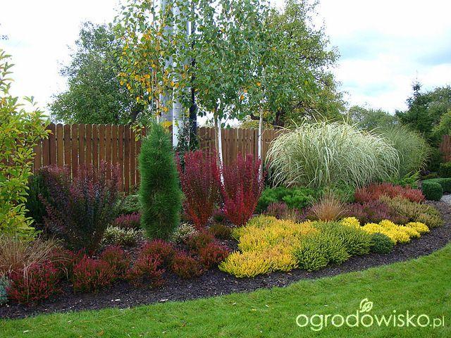 Pojedyncze pytania na temat projektowania rabat - strona 3 - Forum ogrodnicze - Ogrodowisko
