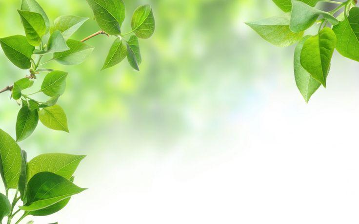 Скачать обои ветка, leaf, фон, leaves, tree, листья, зеленые листья, листок, дерево, background, green leaves, branch, раздел природа в разрешении 2560x1600