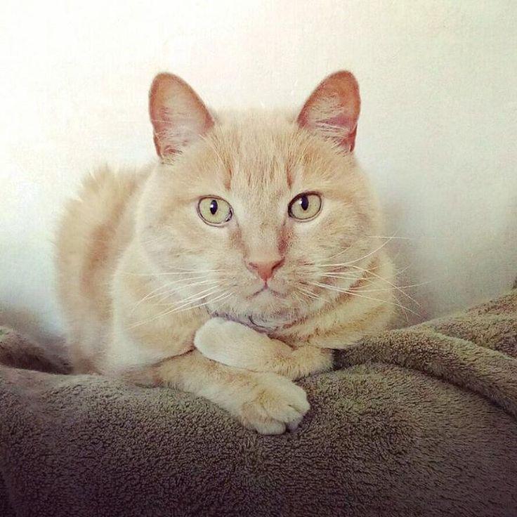 """4 mentions J'aime, 1 commentaires - P&L photo (@puce.et.lou.photo) sur Instagram: """"Mon grand #sage #thebest #cat #lovecats #catoftheday #instacat #catlover"""""""