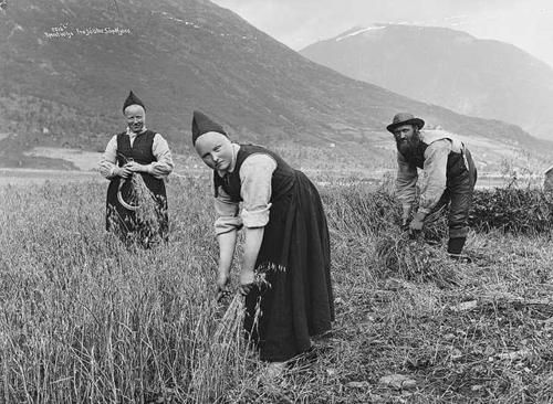 Harvesting of oats in Jølster, Norway ca. 1890. (Photo: Axel Lindahl/Norwegian Museum of Cultural History)