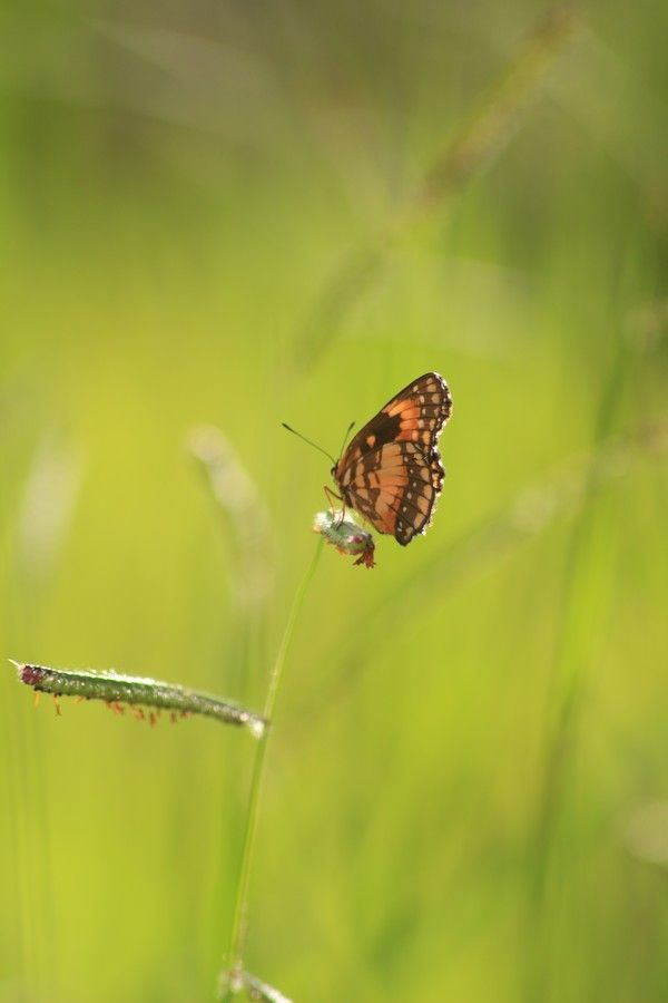 Butterflies in my garden by Wylkon Cardoso on 500px