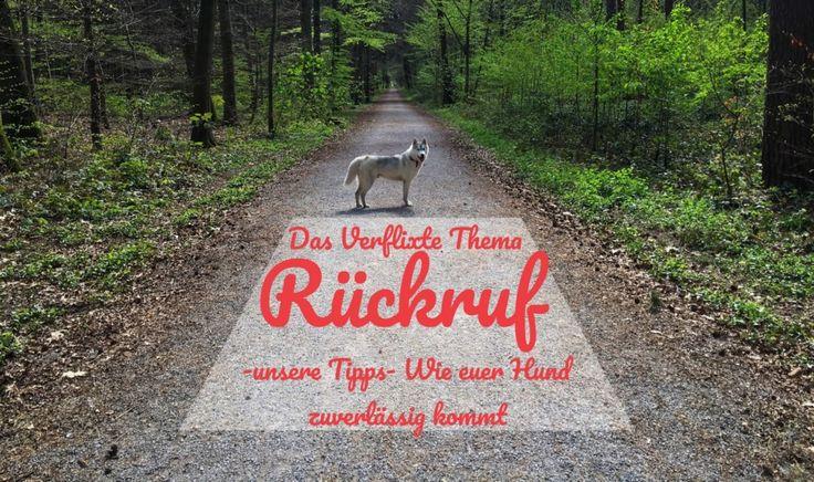 Hund | Rückruf | Tipps | Ideen