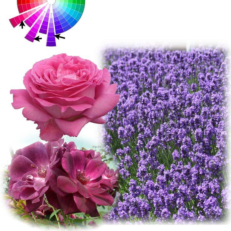 Les 9 meilleures images du tableau cercle chromatique sur pinterest roues de couleur cercles - Il faut cultiver notre jardin analyse ...