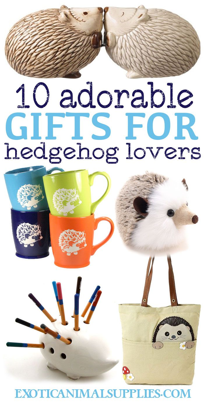 Super cute gift ideas for hedgehog owners and hedgie lovers. Look at that plushie! So adorable :)