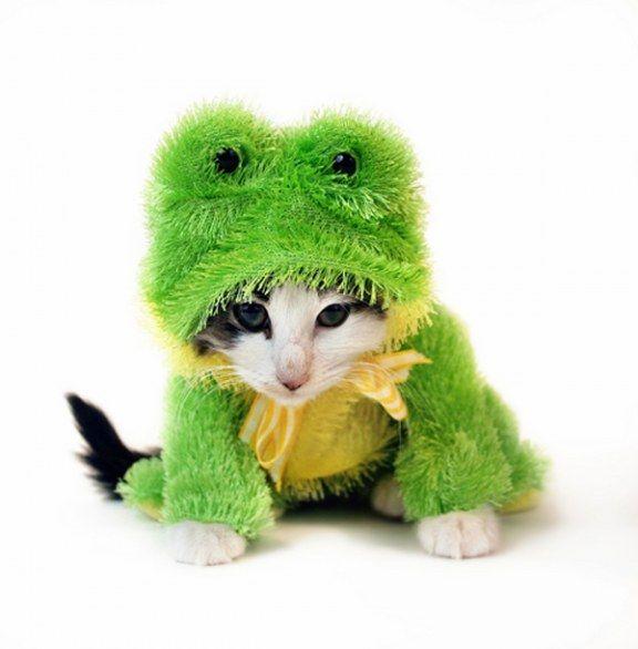 Costumi di Halloween per gatti, le foto dei travestimenti più bizzarri