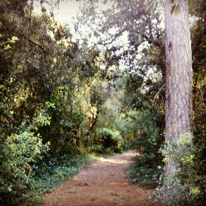Ostia lido pineta - forest