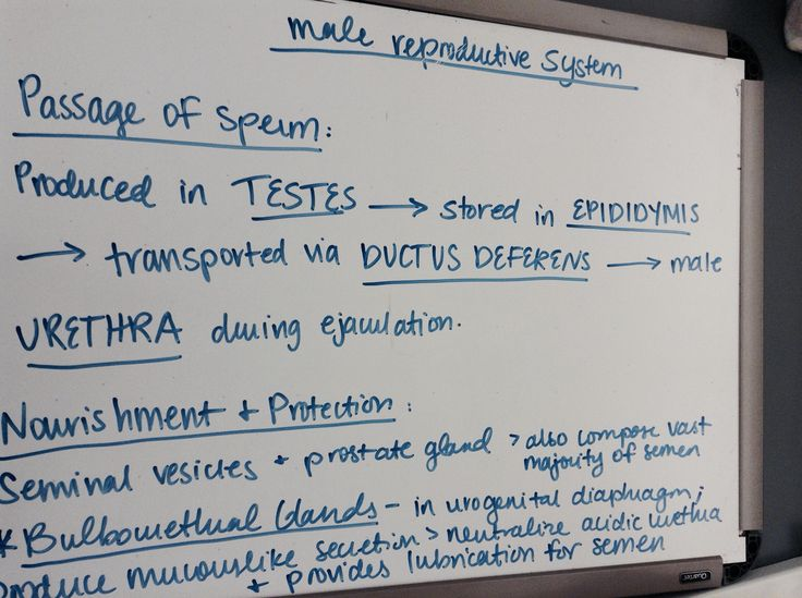 Notes on Male Reproductive System