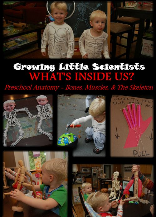 Lots of great ideas for teaching about skeletons, bones, and joints. Like, putting long wrapping paper tubes on kids' arms (blocking their elbow joints) and telling them to try to scratch their heads.)
