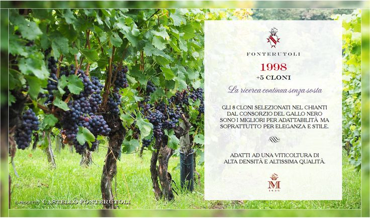 Solo i migliori cloni vengono selezionati per ottenere il più eccellente Castello di Fonterutoli. @marchesimazzei #fonterutoli #marchesimazzei #wine #tuscany