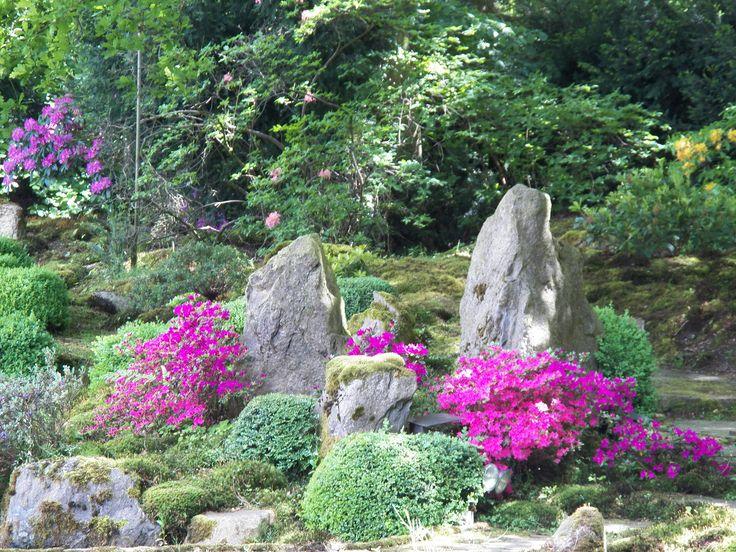 Azaleen und Rhododendrenblüte im Garten von Schloss Eickhof. Azaleas bloom in the garden of Castle Eickhof