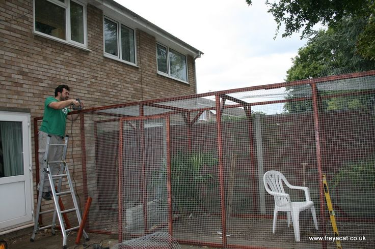 catio designs home inspiration pinterest to be cats