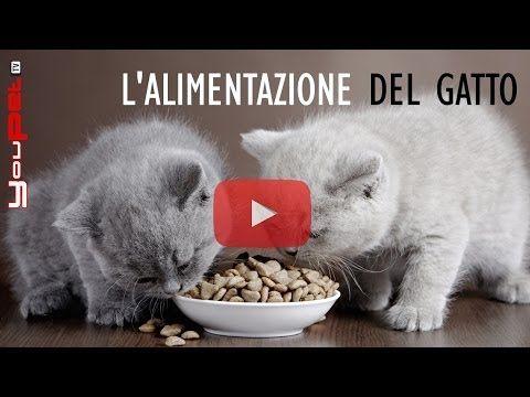 """<p>L'importanza di una sana ed equilibrata alimentazione è un argomento che fa ormai parte della nostra cultura e sul quale siamo ormai ampiamente informati. Ma che succede quando s'inizia a parlare dell'alimentazione dei nostri gatti? Siamo certi di sapere come nutrire i nostri amici o, magari, ci limitiamo a seguire i consigli delle pubblicità su scatolette e mangimi vari? In questo video, Claudia Di Bari ci spiega come nutrire al meglio i nostri gatti.</p> <div id=""""piccshare_pic_options""""…"""