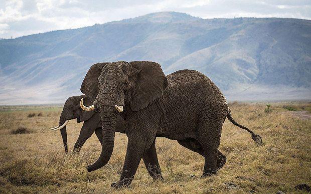 Elephants in the Ngorongoro Crater